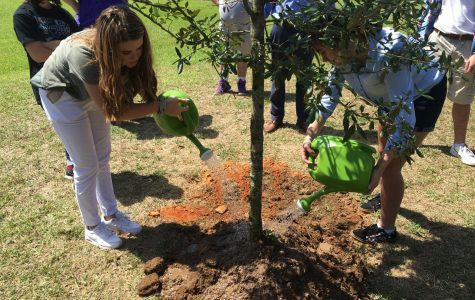 ActiviTREES: Environmental club and the activities they do