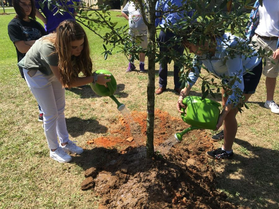 Club president Ansley Salmon waters the newly planted tree.